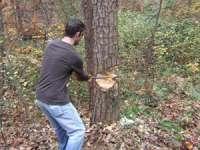 A tăiat fără drept şi sustras 120 de arbori de pe proprietatea unui consătean