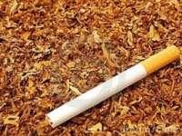 Tutunul, o posibilă soluţie în lupta împotriva cancerului
