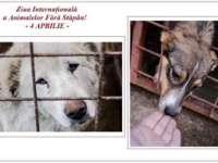 4 Aprilie - Ziua Internațională a Animalelor Fără Stăpân, marcată la Sighetu Marmației