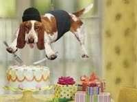 4 octombrie - Ziua Internațională a Animalelor