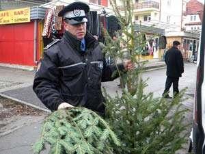 45 pomi de Crăciun au fost confiscaţi de poliţişti