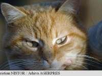 8 AUGUST - Ziua mondială a pisicii