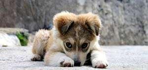 8 sfaturi pentru a primii (bine) un animal de companie