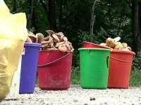 A apărut primul caz de intoxicaţie cu ciuperci în Maramureş. Un bărbat a intrat în comă