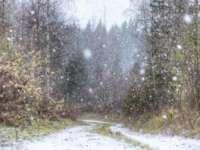 A căzut prima zăpadă din acest sezon. Aflaţi unde