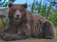 A fost stabilită cauza morții turistului al cărui cadavru a fost găsit în timp ce era târât de un urs