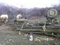 A mers după lemne în pădure în zi de Sărbătoare și a murit strivit de căruță