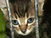 Abuzul asupra animalelor, explicat prin mecanisme psihologice