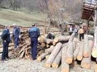 Acţiune pentru combaterea delictelor silvice pe raza judeţului Maramureş