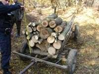 Acţiuni în vederea combaterii fenomenului de tăiere ilegală a pădurilor desfășurate de jandarmii maramureșeni