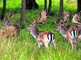 Acţiuni pentru prevenirea braconajului cinegetic pe întreaga vale a râului Vișeu