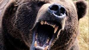 ACTUALIZARE: Femeia din Groșii Țibleșului, internată la Boli Infecțioase, după ce a fost atacată de un urs