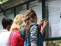 Admitere liceu 2015 Maramureș: Au fost afisate rezultatele repartizarilor