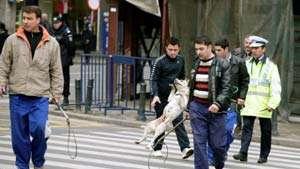 Afaceri necurate pe spatele câinilor maidanezi: 219 lei cheltuiți pentru prinderea fiecărui câine!