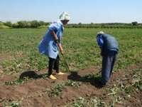 AGRICULTURĂ - Aproximativ 30.000 de cereri de subvenţie au fost depuse de fermierii din Maramureş