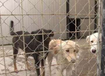 AJUTOR: Câinii maltrataţi în adăpostul din Dej primesc un camion cu mâncare şi medicamente din Germania