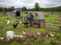 AJUTOR LA ACCESAREA MĂSURII 112: Proiecte gratuite pentru modernizarea fermelor familiale