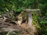 Albania va interzice tăierea arborilor timp de zece ani, pentru a proteja pădurile