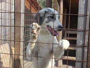 CCR: Legea câinilor comunitari, constituțională. Câinii maidanezi pot fi EUTANASIAŢI