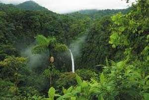 Amazonia: Au fost descoperite 15 specii noi de păsări