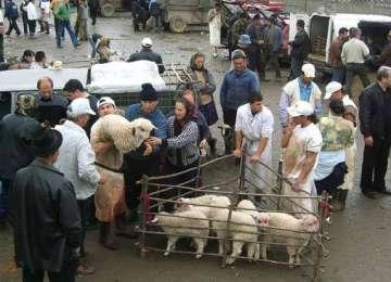 Amenzi de 200 lei în târgul din Sighetu Marmaţiei