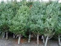 AMENZI DE 30.000 DE LEI – Acţiuni pentru verificarea respectării legislaţiei în domeniul silvic şi al sistemelor de securitate