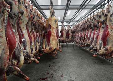 Anchetă Europol în Maramureș - De la un abator din județ a fost trimisă în Europa carne infestată cu cadmiu