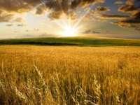 ANM: Cantitatea de apă din solul agricol este satisfăcătoare