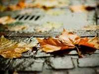 ANM: Informare meteo de ploi de joi după-amiază până sâmbătă, în întreaga țară