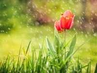ANM: Ploi şi răcire accentuată a vremii în întreaga ţară, începând de marți dimineață până miercuri seară