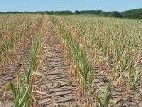 ANM: Seceta puternică din sudul și sud-estul țării va continua și în luna octombrie