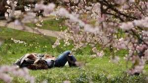 ANM: Vreme în continuă încălzire în intervalul 21 aprilie - 4 mai. Aflaţi ce temperaturi vor fi în Maramureş