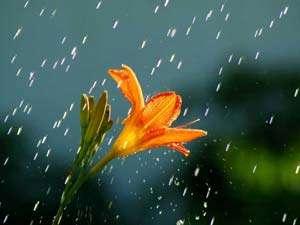 ANM: Vreme instabilă în următoarele două săptămâni în Maramureş