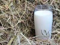 ANSVSA: Laptele provenit din ferme este conform;primele rezultate de la Argeș și Dolj sunt negative
