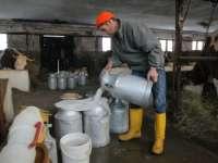 APIA: 14 mai, termen limită pentru depunerea declarațiilor anuale de cotă de lapte fără penalități