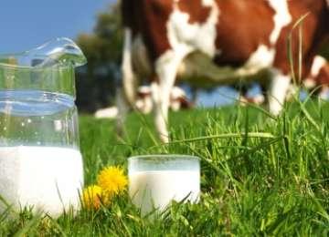 APIA - Ajutoare financiare excepţionale pentru producătorii de lapte. Care sunt condițiile pentru acordarea banilor