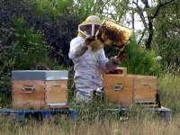 Apicultorii care deţin până la 75 de familii de albine nu vor plăti impozit pe venit