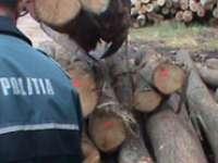 Aproximativ 25 mc lemn confiscat şi amenzi în valoare de 4.000 de lei aplicate de polițiștii maramureșeni