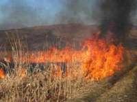 Aproximativ 30 de hectare de vegetaţie uscată au ars în ultimele 24 de ore, pe raza judeţului Maramureş