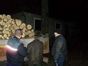 Şapte maramureşeni cercetaţi pentru tăiere ilegală şi furt de arbori