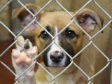 """Asociația """"Prietenii animalelor"""" Sighet dorește să monteze un sistem de supraveghere la Adăpostul de câini"""