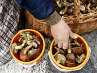 ATENȚIE! Ciupercile din piaţă pot fi periculoase