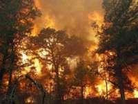Atenționare de călătorie Ucraina - incendii de pădure în proximitatea capitalei Kiev