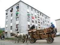 Au primit interzis! Caii şi căruţele nu mai au ce caută în Baia Mare