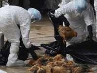 AVERTISMENT - Transmiterea virusului gripei aviare H7N9 de la om la om este posibilă