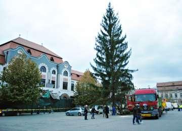 BAIA MARE: Bradul de Crăciun a fost instalat în Centrul Vechi . Are o înălţime de 32 metri