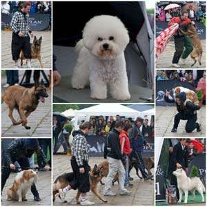 Baia Mare găzduieşte în perioada 5-6 octombrie un concurs internaţional canin