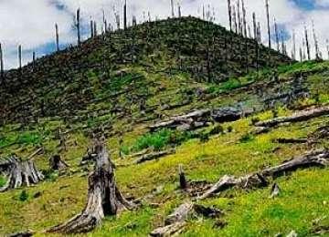 Băimărenii protestează împotriva defrişării pădurilor