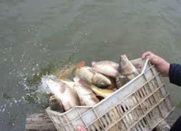 Bălţile şi râurile din Maramureş au fost repopulate cu peşte din Ungaria