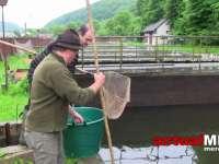 Barajul Firiza a fost populat cu sute de kilograme de păstrăv curcubeu